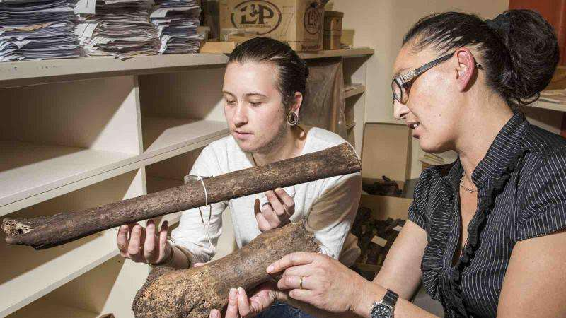 Student dig uncovers hundreds of rare moa bones