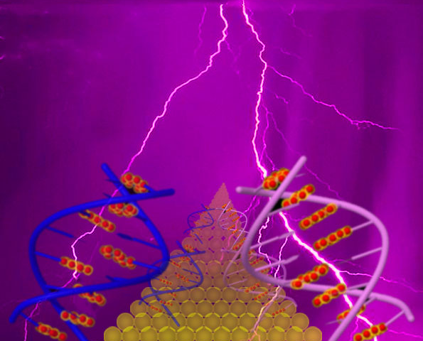 Study shows novel pattern of electrical charge movement through DNA