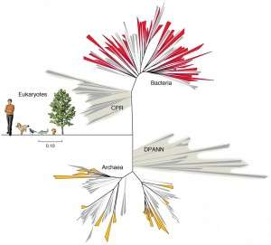 Subsurface discovery sprouts a new branch on the tree of life