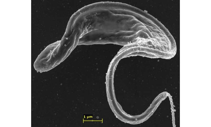 Targeted nanoparticles can overcome drug resistance in trypanosomes