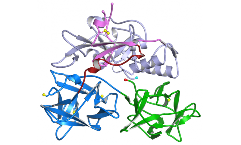 Team determines structure of toxin in respiratory infections