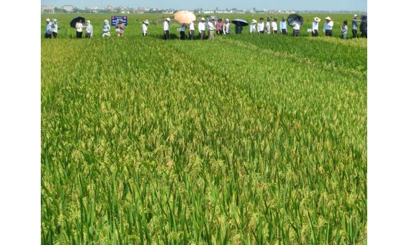 TGAC leads development to diminish threat to Vietnam's most important crop