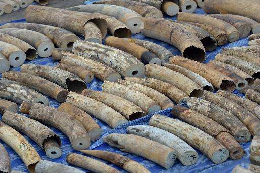 The 739 pieces of tusk were found stashed in a container which arrived at the port on April 18 after being shipped from the Demo