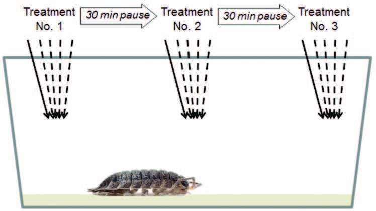 The bold and the shy one: Could woodlice have personalities?
