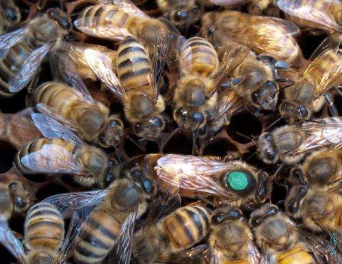 The environment may change, but the microbiome of queen bees does not