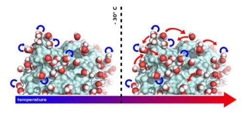 The motion of water molecules on a protein surface