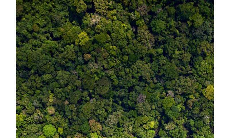 Theory of 'smart' plants may explain the evolution of global ecosystems