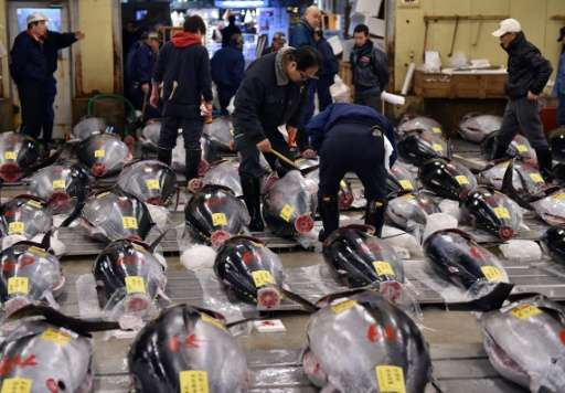The Pew Charitable Trusts says the bluefin and bigeye tuna species could become severely depleted after the Western and Central