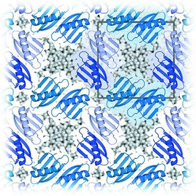 The silent partner in macromolecular crystals