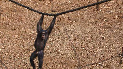 The Tacugama Chimpanzee Sanctuary was forced to close in August last year as the Ebola outbreak swept the region