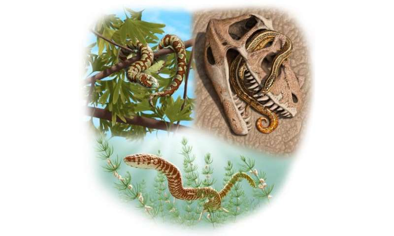 The world's oldest known snake fossils: Rolling back the clock by nearly 70 million years