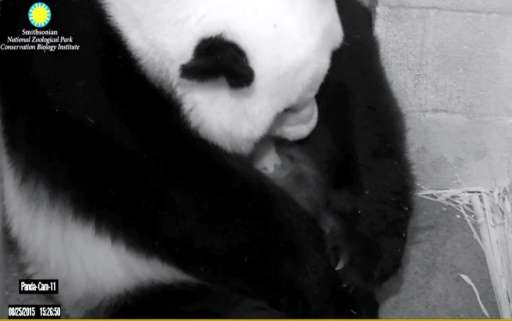 This image courtesy of the Smithsonian National Zoo and Conservation Biology Institute shows giant panda Mei Xiang holding one o