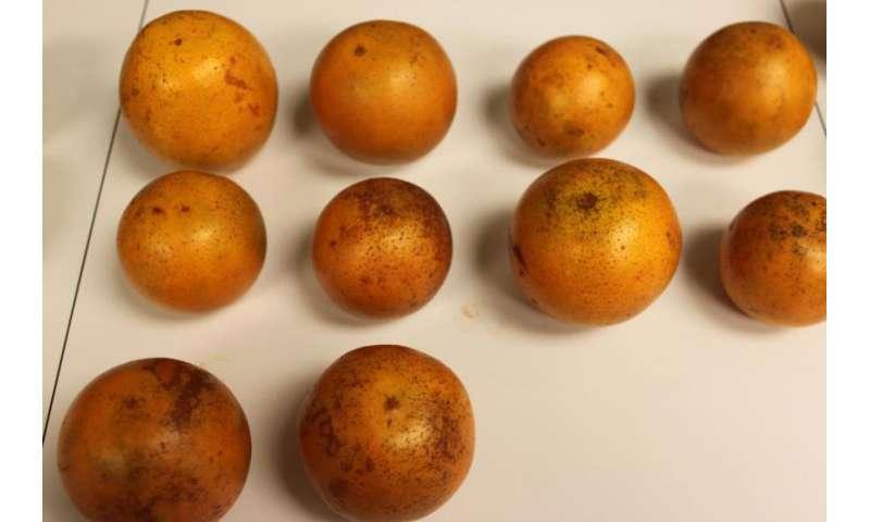 Three food grade colorants identified for citrus