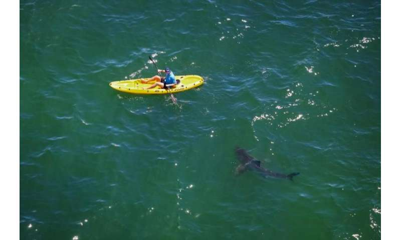 To avoid dangerous shark encounters, information trumps culling
