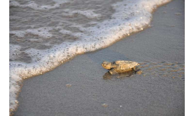 To the rescue: Helping threatened Mediterranean sea turtles