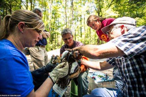 Tracking bald eagles in coastal North Carolina