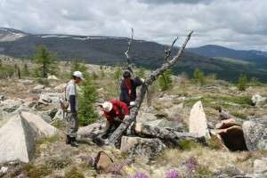 Tree rings confirm unprecedented warming in Central Asia