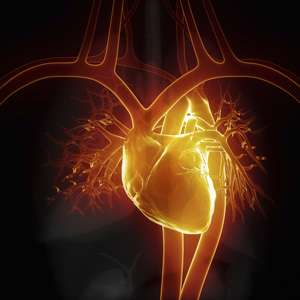 Tweaking the heart's response to injury could lead to better treatment