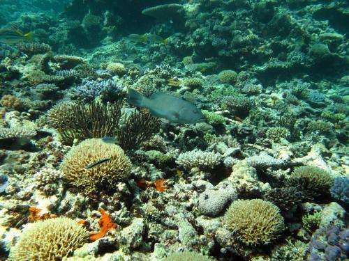 Twice the coral trout in Great Barrier Reef protected zones