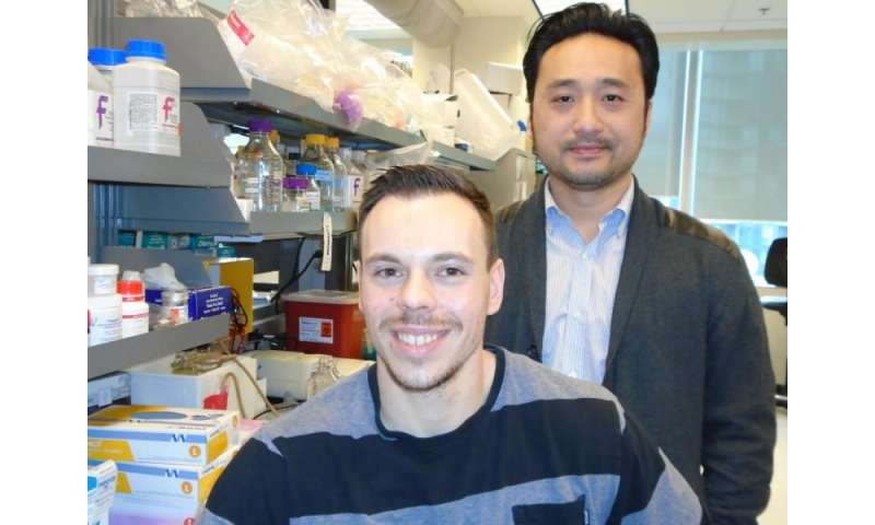 Two compounds target the gut to lower blood sugar -- in obese or diabetic rats