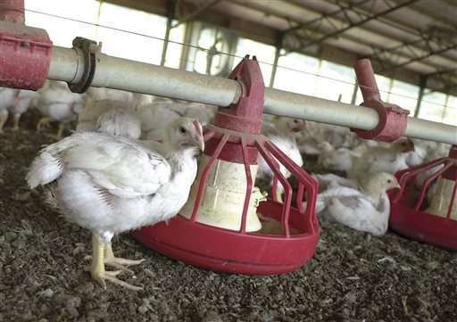 Tyson Foods hopes to rid US chicken of antibiotics by 2017