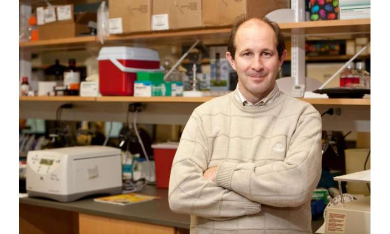 UF Health researchers find some evidence of link between stress, Alzheimer's disease