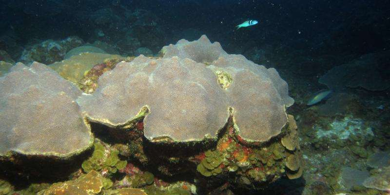 UM researchers study sediment record in deep coral reefs