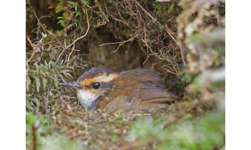 UM study uncovers why songbirds vary in time devoted to warming eggs