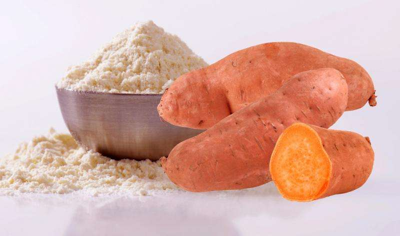 University student successfully innovates sweet potato flour and makes company to commercialize it