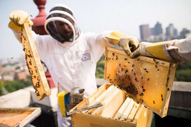 Urban hives can help safeguard the future of food, says a scientist and beekeeper