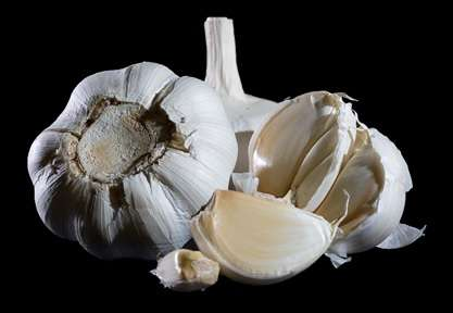 Using garlic to combat antimicrobial resistant urinary tract infections