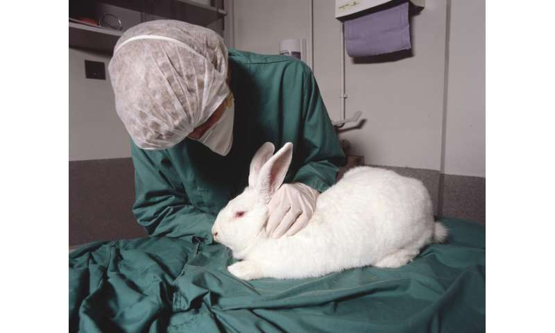 Varying animal research standards are leading to bad science