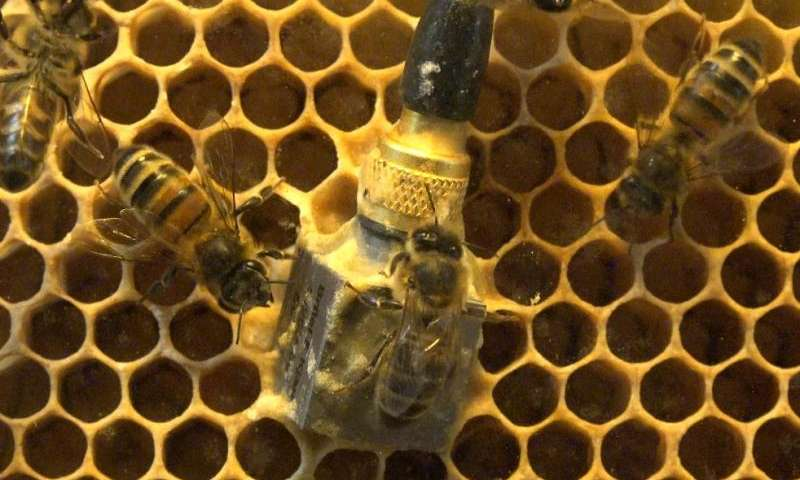 Vibrating bees tell the state of the hive