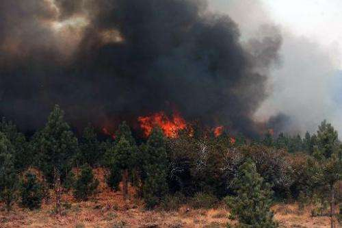 View of forests on fire in Chubut, southern Argentina, on March 1, 2015