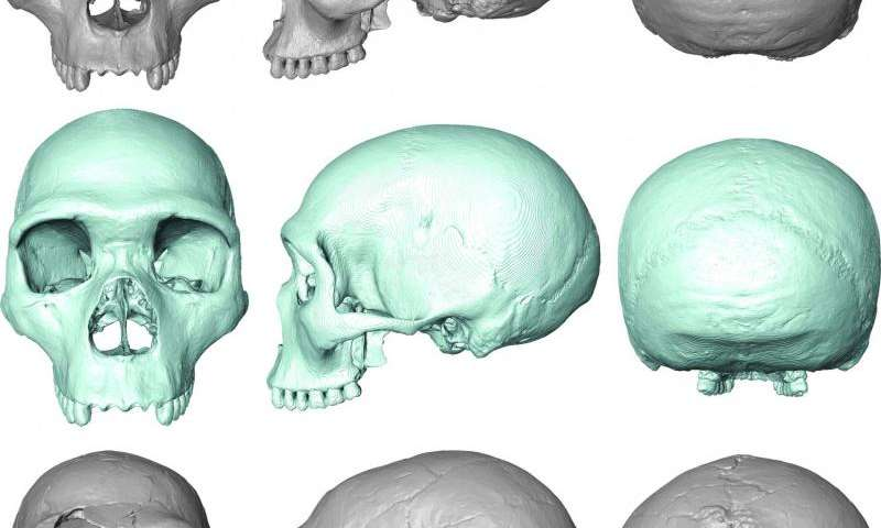 'Virtual fossil' reveals last common ancestor of humans and Neanderthals