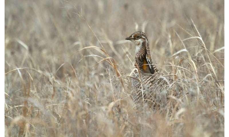 Vulnerable grassland birds abandon mating sites near wind turbines