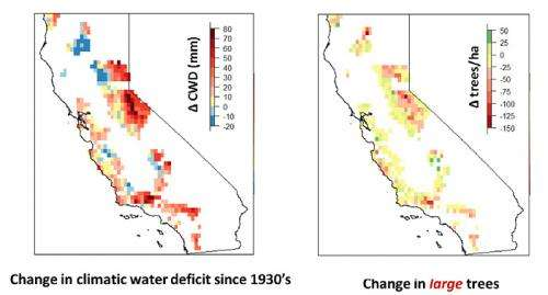 Warmer, drier climate altering California forests