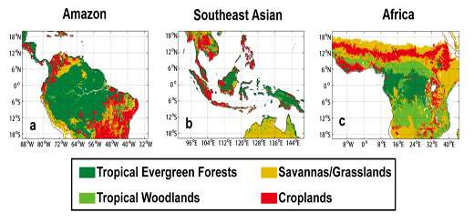 Water forms common thread in diverse rainforest ecosystems