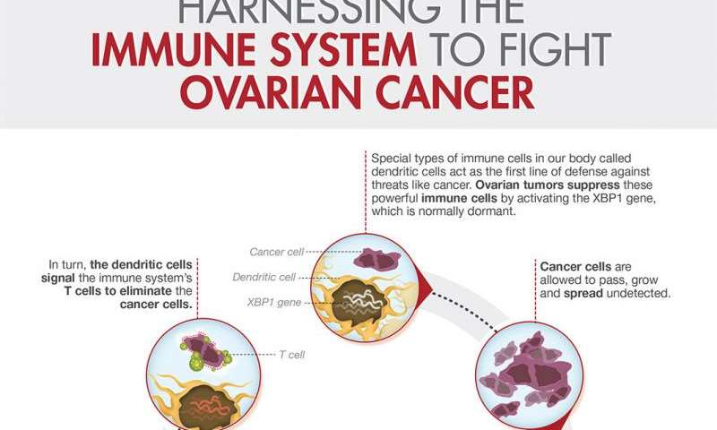Researchers Discover How Ovarian Cancer Halts Body S Natural Defense Against Tumor