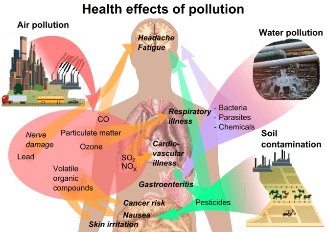 What does exposure to environmental chemicals mean for our health?