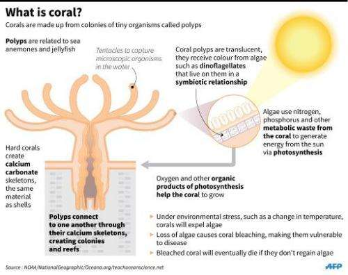 What is coral?