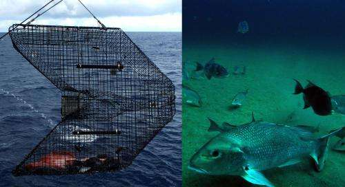 When estimating fish populations, seeing is believing