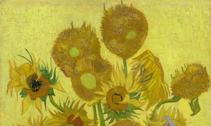 Why van Gogh's Sunflowers are wilting