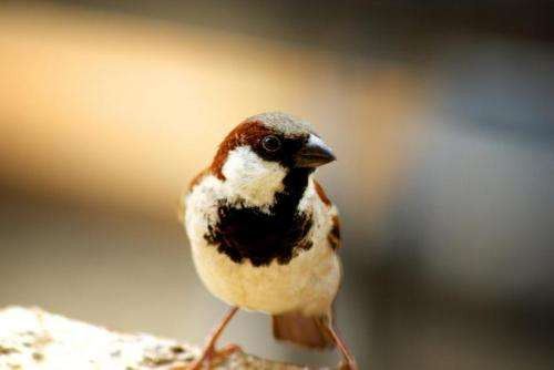 Why you should celebrate World Sparrow Day