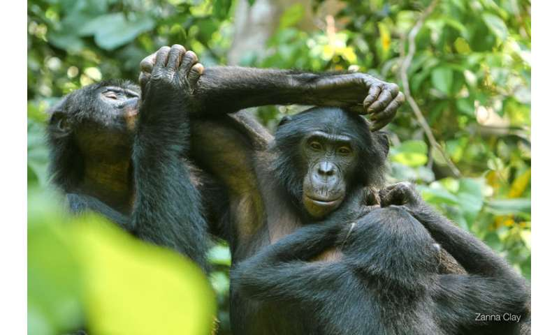 Wild bonobos use referential gestural system to communicate their intentions