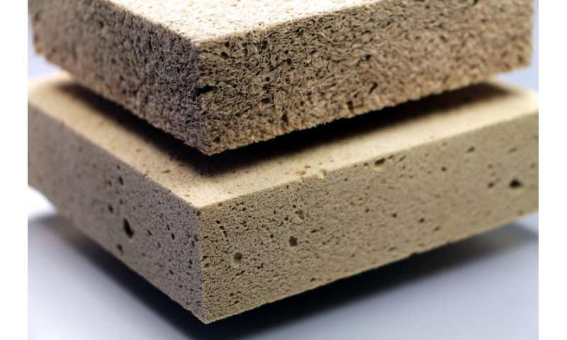 Wood-derived foam materials