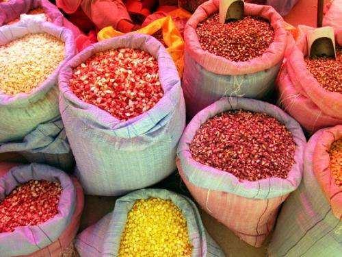 World crop diversity survives in small farms from peri-urban to remote rural locations