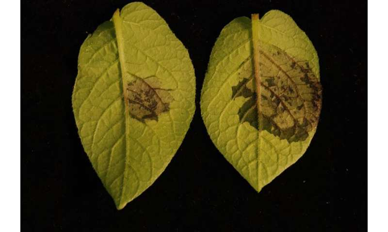 Worm pheromones trigger plant defenses, study finds