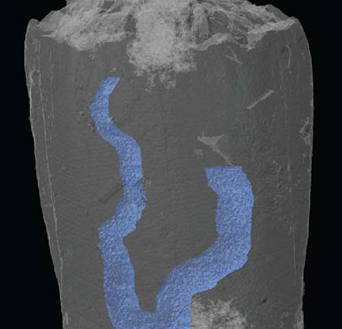 X-rays uncover gut of 320-million-year-old-animal