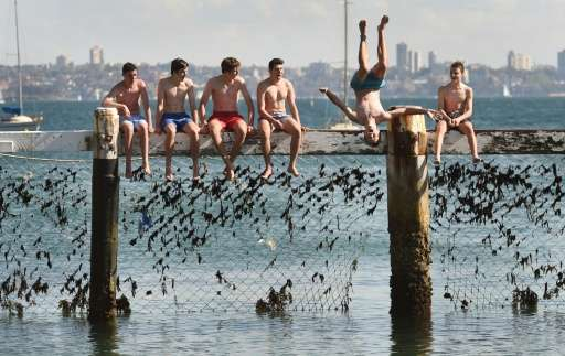 Youths play on a shark net at Little Manly Cove as shark experts assess cutting-edge technologies to counter attacks at a summit